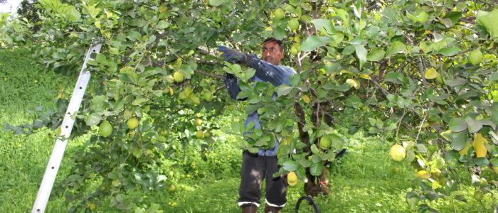 limoni, i giardini dell'anapo, azienda agricola biologica